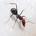 Animals & Idioms Ant