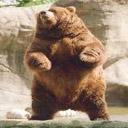 Animals & Idioms Bear