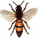 Animals & Idioms Bee