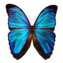 Animals & Idioms Butterfly