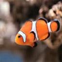 Animals & Idioms Fish