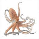Animals & Idioms Octopus