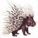 Animals & Idioms Porcupine