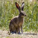Animals & Idioms Rabbit