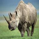 Animals & Idioms Rhinoceros