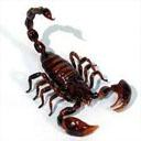 Animals & Idioms Scorpion